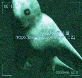 克苏鲁神话怪物55 / 作者:伤我心太深 / 帖子ID:19100