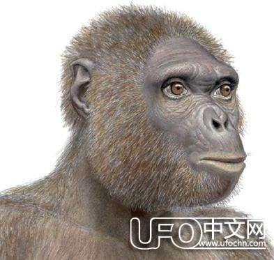 人类进化史缺失的一环92 / 作者:伤我心太深 / 帖子ID:19316