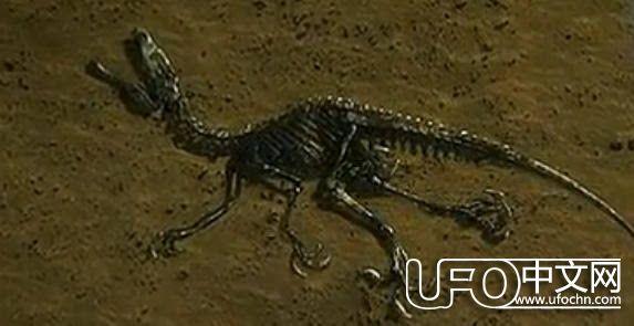 恐龙是怎么灭绝的原因:超新星爆炸引起恐龙灭绝24 / 作者:伤我心太深 / 帖子ID:22048